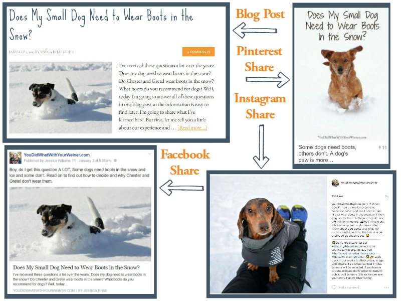 Example of Blog and Social Media Shares - PetTalkMedia.com
