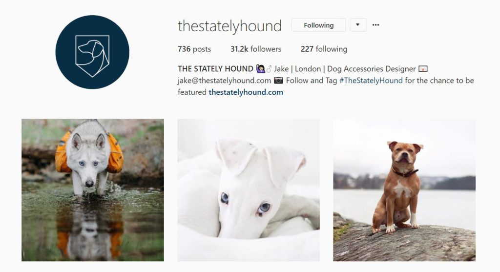 The Stately Hound Instagram Feature Account