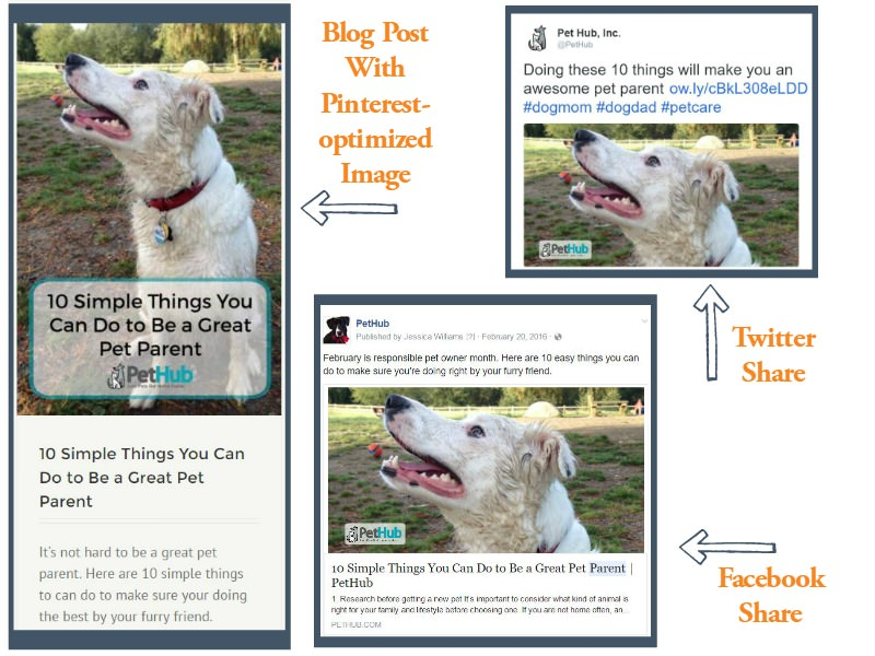 Blog Post and Social Shares Example - PetTalkMedia.com